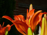 Photographer: Bernie Seward, Denver  The plant: Lily  The camera: Panasonic DMC-FZ50 on a tripod