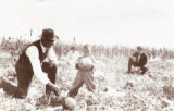 CHILD AND MELON c. 1915 O. T. Jackson is pictured here with a child next to a corn field in their...