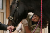 MJM151   Dr. Melissa Esser (cq) of the Littleton Equine Medical Center treats cuts and scrapes on...