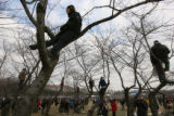 MJM146 A handful of people climb trees along the National Mall tot get a better view on Tuesday,...