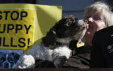 On the west steps of the State Capitol Debbie Faulkner Presdient of CAWs - Citizen for Animal...