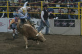 J.C. Navarro (cq) rides during the Denver Chute-Out bull riding competition at the Denver Coliseum...