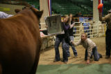 Chelsea Good, 23, (cq) holds a mirror so the bull can see himself to stay calm while Katina...