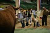 Chelsea Good, 23, (cq) holds a mirror so the bull can see himself to stay calm, while Katina...