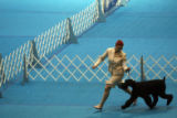 MJM420 JoAnn White (cq) of Fort Collins, Colo. competes with her Giant Schnauzer, AzzumA's An...