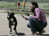 Hank, a pit bull plays at Cherry Creek Res. Wednesday June, 8, 2005,  with owner Jen, (who asked...