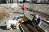 Barbara Macfarlane plants some peas in the vegetable garden outside their Denver house, while her...