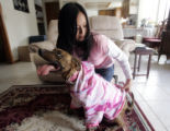 Florence Vianzon (cq) gets her five-year-old pitt bull Isis dressed up in a t-shirt so she can...