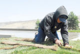 Falabarvo Marana of Green Valley Turf Co. cuts pieces of sod to fit around the sidewalk April 21...