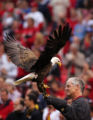 A handler holds the Eagle LIberty before the Colorado Rockies against the St. Louis Cardinals on...