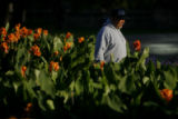 DM8501  Civic Center Park horticulturist Joe Renteria starts his day amongst the flowers as the...