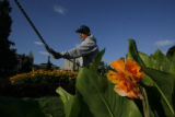 DM8503  Civic Center Park horticulturist Joe Renteria starts his day amongst the flowers as the...