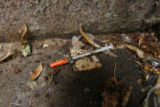 1791  A discarded syringe lies in a corner of the Greek Amphitheater in Civic Center Park in...