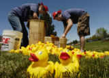 Sunni Rodgers (cq), left, and Brendan Landry (cq), right, get some 1,000 rubber ducks ready for a...