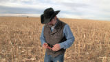 Ben Elliott (cq) of Colorado's Best Beef Company examines a corn cob  in a corn field 15 miles...