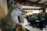 222  A stuffed coyote sits on a display table as city decision makers on wildlife issues attended...
