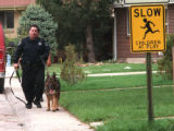 RMN121 4-26-99-SHERIDAN, COLORADO,  An Arapahoe County Sheriff deputy uses a K-9 dog to track  a ...