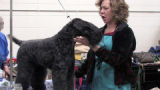Penny Taylor grooms Tucker, a Casey Blue Terrier during the 14th Annual Rocky Mountain Cluster at...