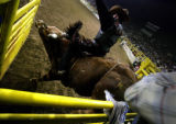 TZ Ranch bull 'Flashover' begins his ride with Jay Foscalina during the National Western Stock...