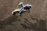 DM0065   Josh Cole of Quitman, Texas hangs on as he goes for a ride on Buckley's Vitalix during...