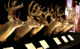 Colorado Mule Deer in the Eastman's Hunting Journal Trophy Deer display at the 2008 Denver...