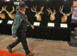 Roger Selner (cq), exhibit producer, inspects his display of Colorado Mule Deer in the Eastman's...
