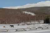 Horses from Devil's Thumb Ranch eat hay, with the Continental  Divide in the background, Monday...