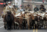 Cowboys drive 25 longhorns down the streets of LoDo to lead off  the annual National Western Stock...
