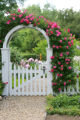 William Baffin own-root roses climb a trellis and archway in a Denver home on June 5, 2007. (ELLEN...