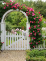 William Baffin roses climb a trellis and archway in a Denver home on June 5, 2007. (ELLEN...