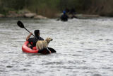 DM0582  A kayaker floats down the South Platte River with his dog near Confluence Park in Denver,...