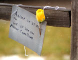 A sign and flower were placed near the family home of Aarone Thompson early Thursday morning....