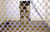(AURORA, Colo., Nov. 3, 2005) A female pit bull, is held in the Aurora Animal Shelter a day after...