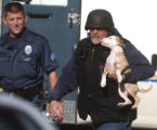 A family dog is taken from his apartment after Aurora SWAT team  was called to the Sunnyside...