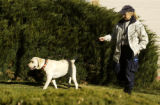 (DENVER, Colo., Nov. 18, 2005  A unidentified handler from Speciality K9 walk her dog in the front...