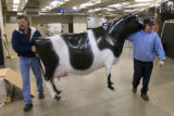 DM1367   Chris Robinson, 48, left, and Mark Barstow, 45, carry a plastic cow through the National...