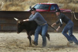 Josh Peek (r) and Bryce Segotta  are running with the steers as they train  for National Western...