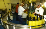 Jose Flores, Francisco Flores and William Duron, left to right, work on filling bottles with...