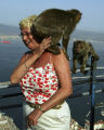 (NYT35) GIBRALTAR -- June 27, 2005 -- GIBRALTAR-MONKEYS -- One of the more than 200 Barbary apes...