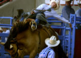 Billy Herbert holds on to the bronco named, Drop Out as he is the first out on the final day of...