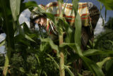 Somali Bantu refugee Halima Abdi, cq, 23, picks weeds at her plot in the Fairview Garden at...