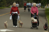 Marianne Jackson (cq) and friend Betty Smith (cq) , left to right, walk their dogs Lucy, Annie,...