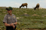 Rocky Mountain National park ranger Ryan Schuster (cq) stands near some elk at the Forest Canyon...