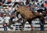 Christopher Harris, Itasca, Texas, flies off a horse while competing in the bareback bronc during...
