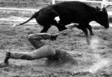rodeo actionRodeos begin at 1:00pm Daily, July 22-31, 2005  Events Include:  Steer Wrestling ...