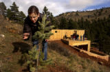 HGTV Dream House.  Tina Galgon-Herr (cq), checks on the baby pine tree that she and Christopher...