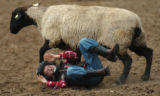 (GREELEY, COLO., JULY 2, 2004)  Mutton Bustin' rider, Zachary Deaquero, 6, of Greeley, Colo., gets...