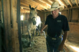 Bill Stiffler (cq) at his rescue operation Friends of Horses in Centennial on Thursday September...