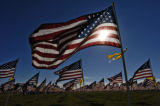 American flags fly in the early morning sun September 11, 2005 in the Healing Field at the Mamie...
