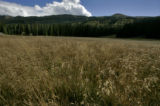 The Alberta meadow at the bottom of the Alberta lift at Wolf Creek Ski area Monday, September 12,...